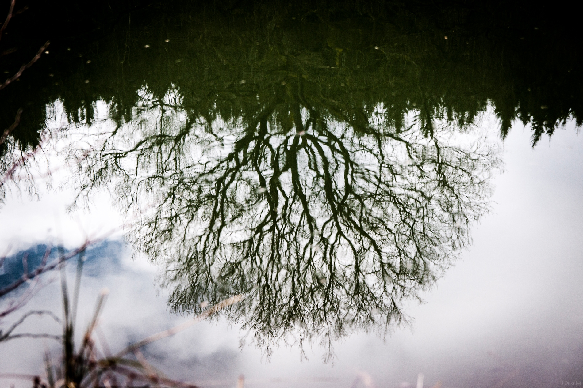 Baum_Wasser.jpg